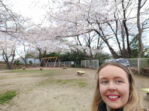 Cherry blossoms near NUFS
