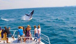 whale-one-mooloolaba-lrg-02