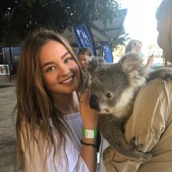 Blog3_-_Koala-triangle
