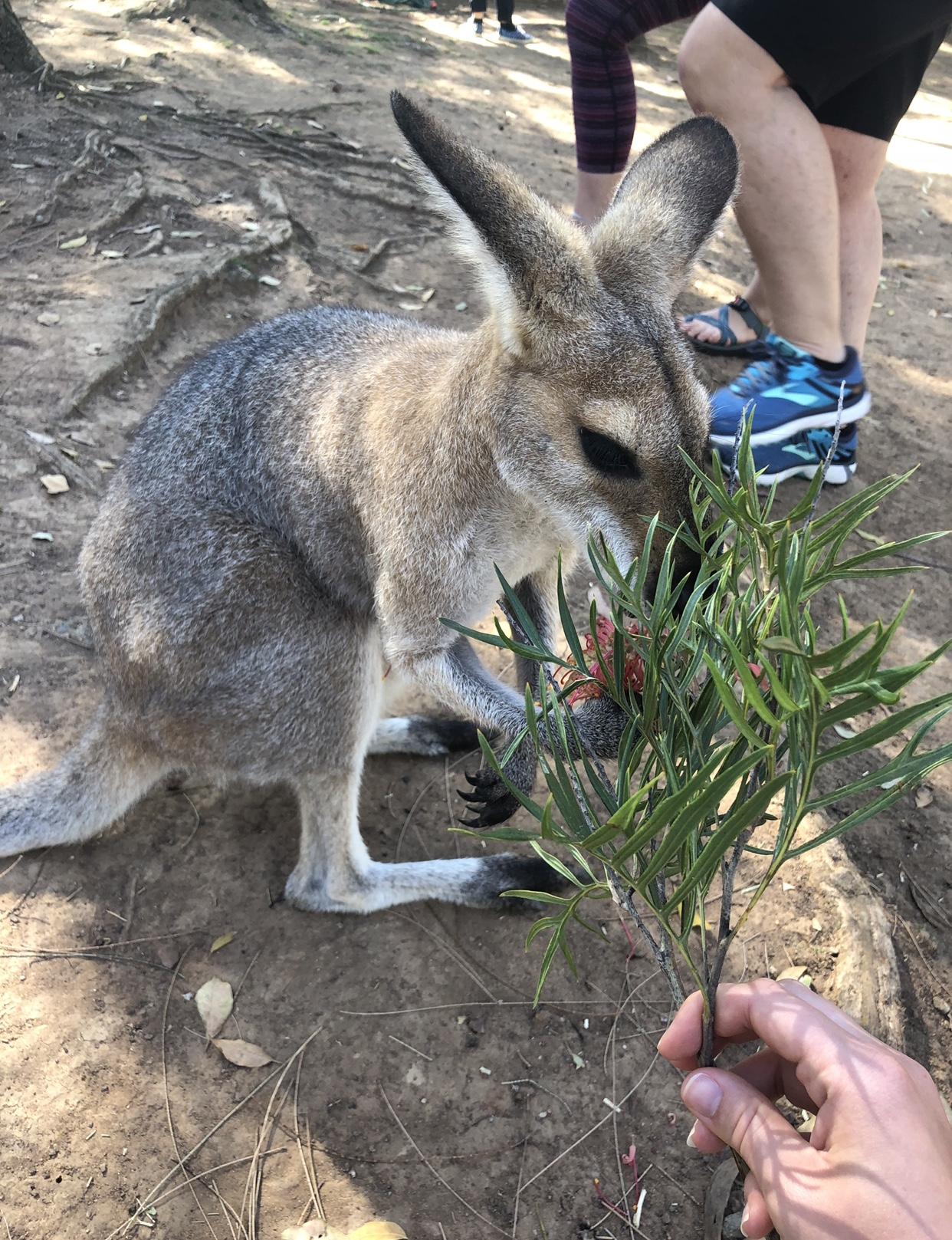 Blog4 - Kangaroo