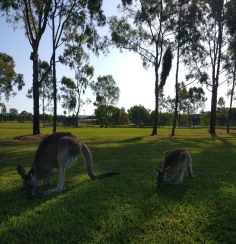 campus wildlife 2