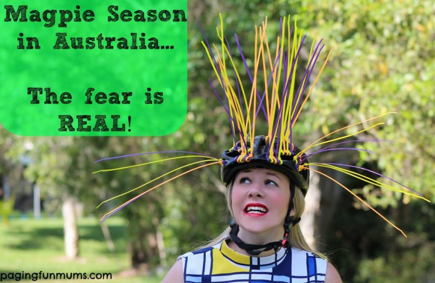 Magpie-season-in-Australia-the-fear-is-REAL-1024x667.jpg